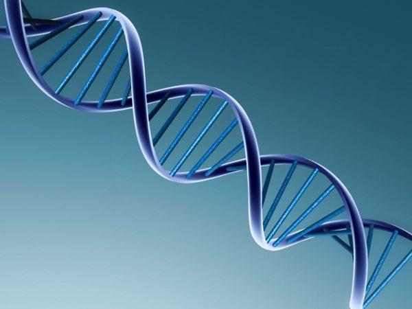 Tehnica MLPA ca metodă de analiză a mutațiilor de tipul delețiilor și duplicațiilor pentru gene implicate în distrofii musculare